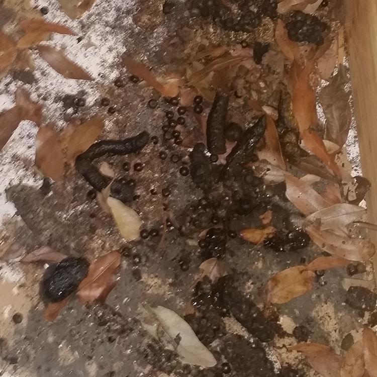 Centurian Services » Animal Control » Bat Poop
