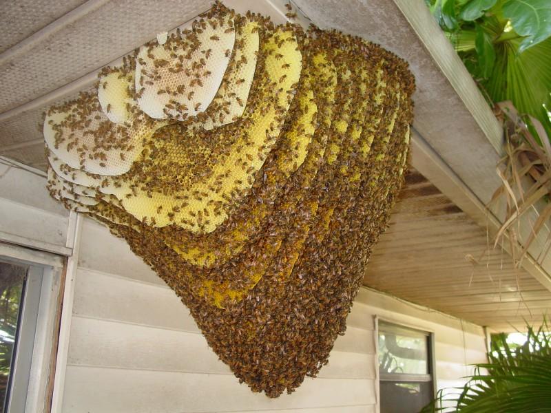Centurian Wildlife Orlando Bee Removal Bee